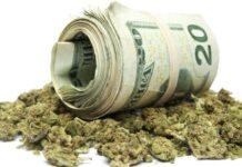 sprzedaż legalnej marihuany w Waszyngtonie