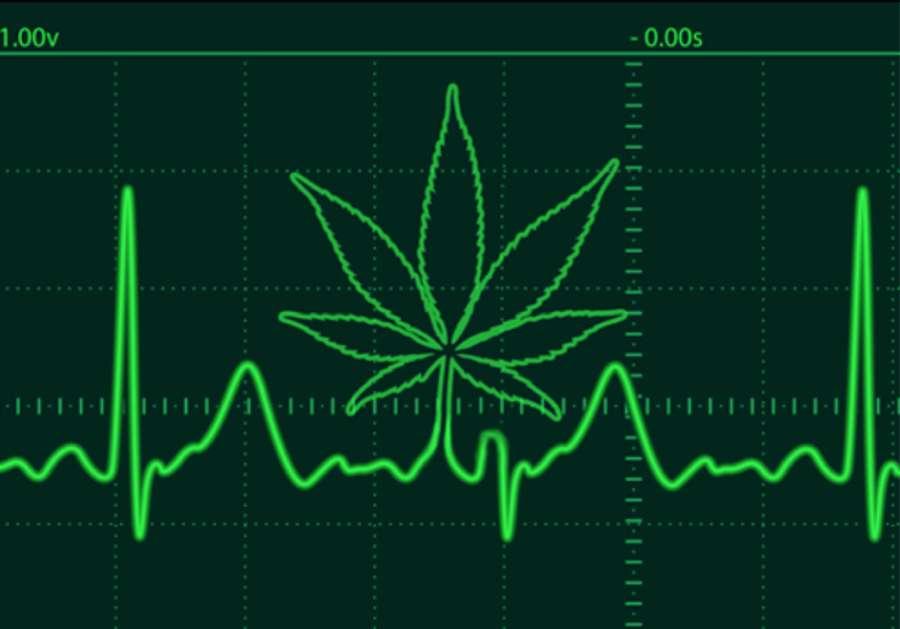 wpływ marihuany na serce - przegląd badań