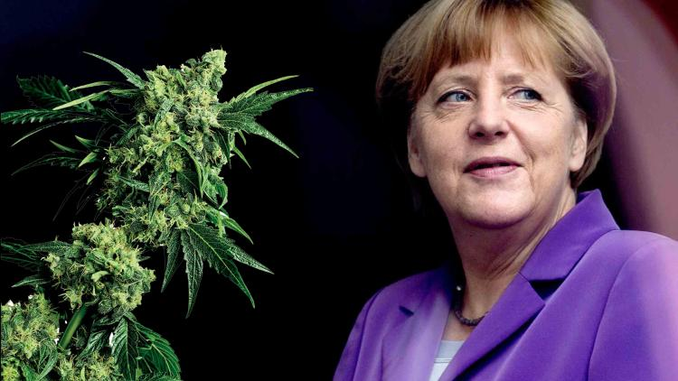 Angela Merkel o legalizacji marihuany w Niemczech