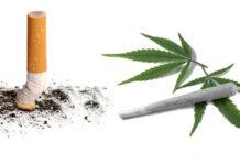 dlaczego nie należy łączyć marihuany z tytoniem