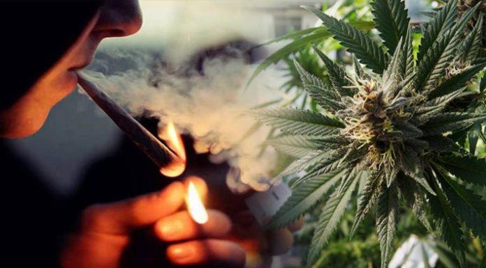 Uniwersytet w Arizonie zapłaci za palenie marihuany przez tydzien