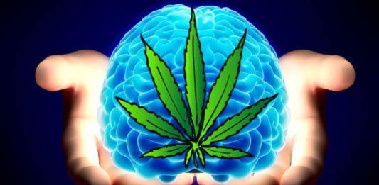 marihuana poprawia funkcjonowanie mózgu