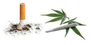 Wpływ palenia papierosów na częstość palenia marihuany