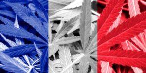 Francja złagodzi prawo dotyczące używania konopi indyjskich