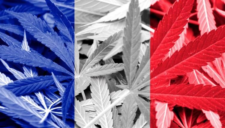 Francja i legalizacja medycznej marihuany