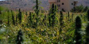 Ile kosztuje gram marihuany i haszyszu w Maroko, oraz jak wygląda sprzedaż