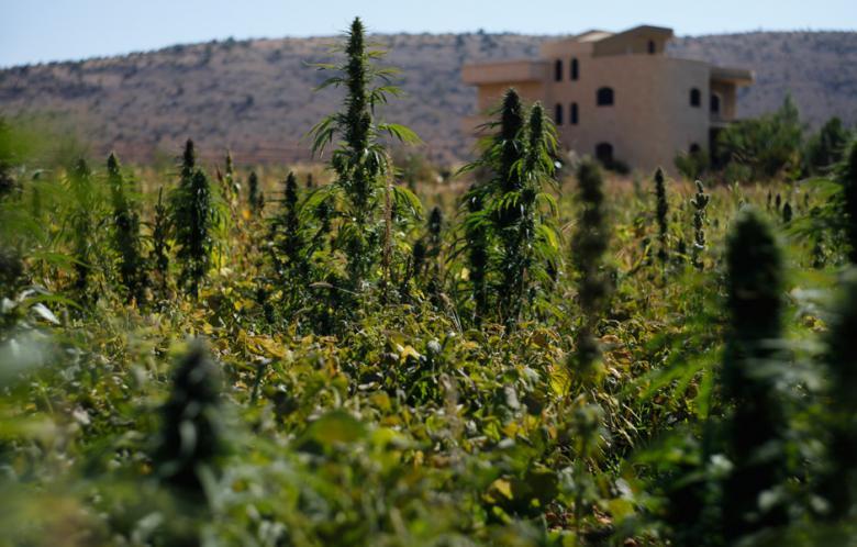 Marihuana i haszysz w Maroko
