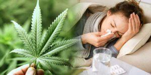 Palenie marihuany podczas choroby i przeziębienia – pomaga czy szkodzi?