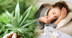 Używanie marihuany podczas choroby i przeziębienia - pomaga czy szkodzi?