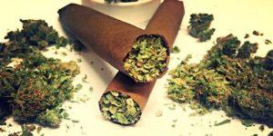 Dlaczego konsumenci marihuany nie powinni palić bluntów