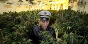 Niemcy: Policjanci chcą dekryminalizacji marihuany