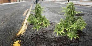 Denver przeznaczy wpływy podatkowe ze sprzedaży marihuany na naprawę dróg