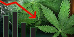 Legalizacja marihuany zmniejszyła przestępczość oraz użycie narkotyków i alkoholu