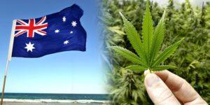 Australia może zarobić na legalizacji marihuany nawet 3.6 mld dolarów rocznie