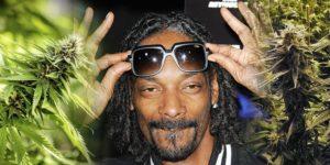 Snoop Dogg został współwłaścicielem największych upraw marihuany na świecie