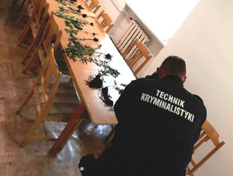 https://faktykonopne.pl/wp-content/uploads/2018/06/bracia-poklocili-sie-o-marihuane.jpg
