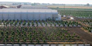 Kolorado: W ubiegłym roku wyhodowano 500 ton marihuany na sprzedaż