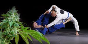 Dlaczego niektórzy zawodnicy brazylijskiego jiu jitsu palą marihuanę przed walką?