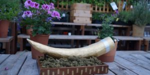 Joint w kształcie kości słonia sprzedany na aukcji za 4.000$