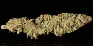 5 klasycznych odmian marihuany, które wpłynęły na współczesny świat konopi