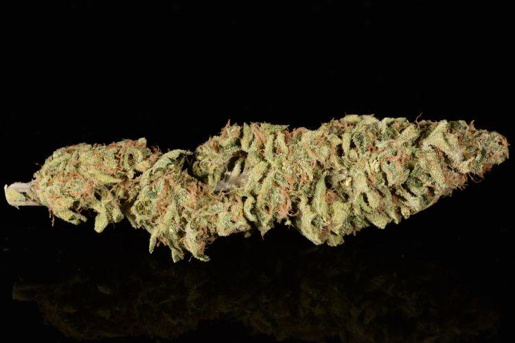 Różne odmiany marihuany