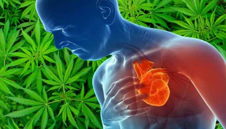 Konsumenci marihuany częściej przeżywają zawał serca