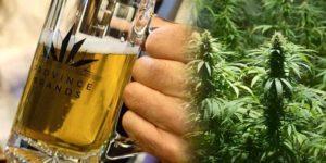 """""""Uderza bardzo szybko"""": Kanada produkuje pierwsze piwo z marihuany"""