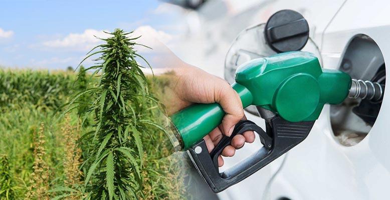 Biopaliwo z konopi jest najlepszym biopaliwem dostępnym na rynku