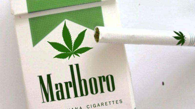 Producent papierosów Marlboro bada możliwości w sekrorze legalnej marihuany