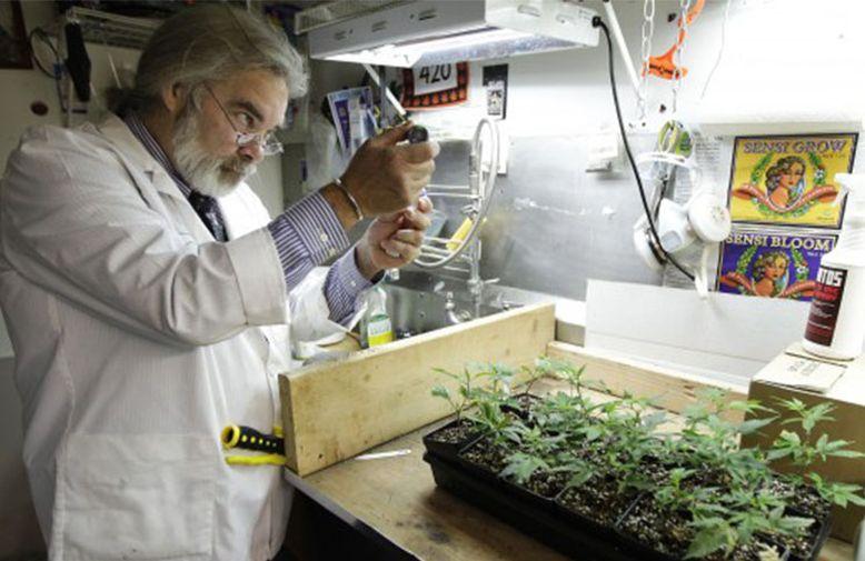 Węgierska firma biotechnologiczna produkuje kannabinoidy z drożdzy
