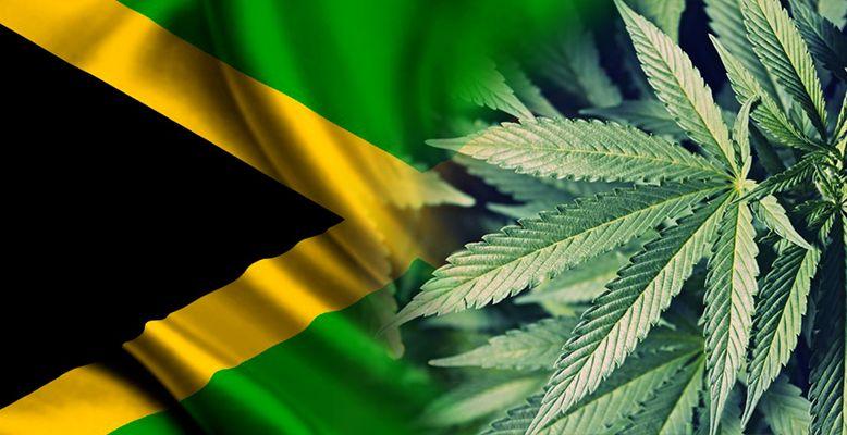 Jamajka eksportuje pierwszą partię medycznej marihuany do Kanady