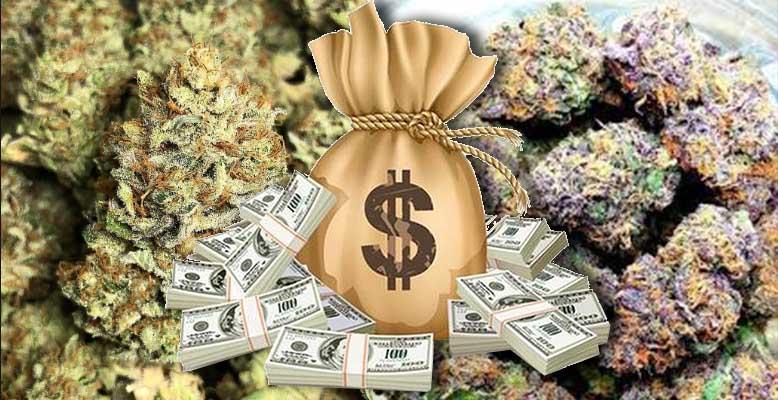 Te odmiany marihuany są droższe niż złoto