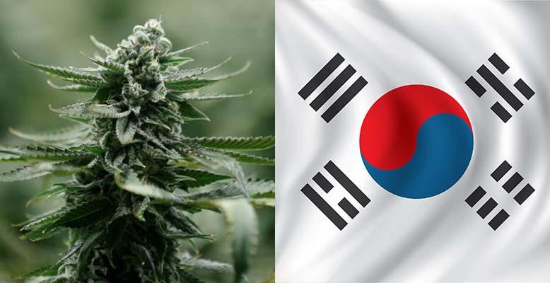 Korea Południowa zalegalizowała medyczną marihuane