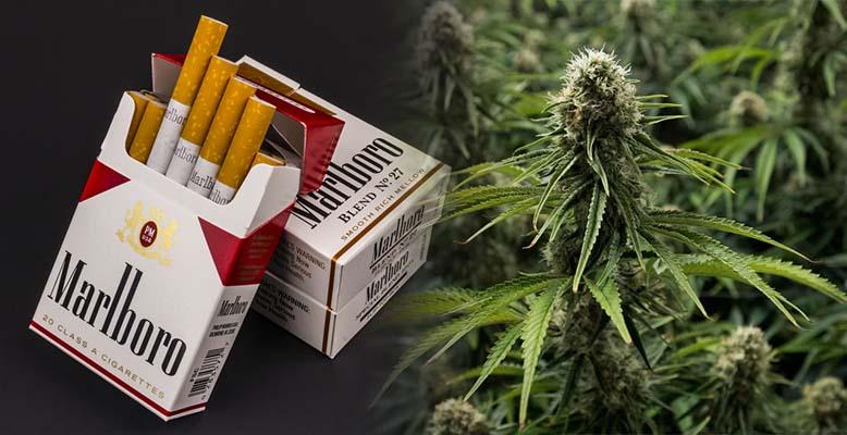 Altria - producent papierosów Marlboro inwestuje w producenta marihuany Cronos Group