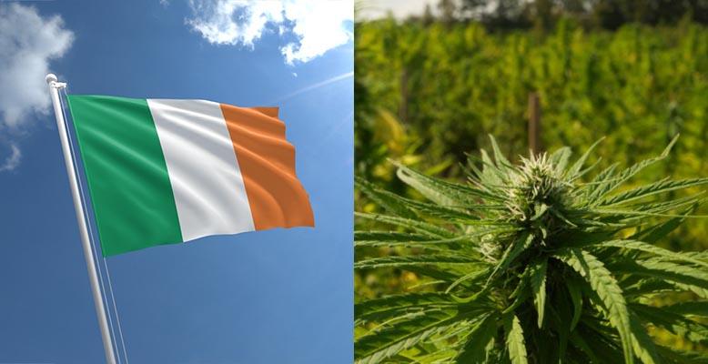 Irlandia: Minister zdrowia chce aby rolnicy uprawiali medyczną marihuanę