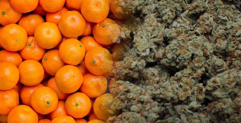 112 kg marihuany w transporcie mandarynek z Hiszpanii