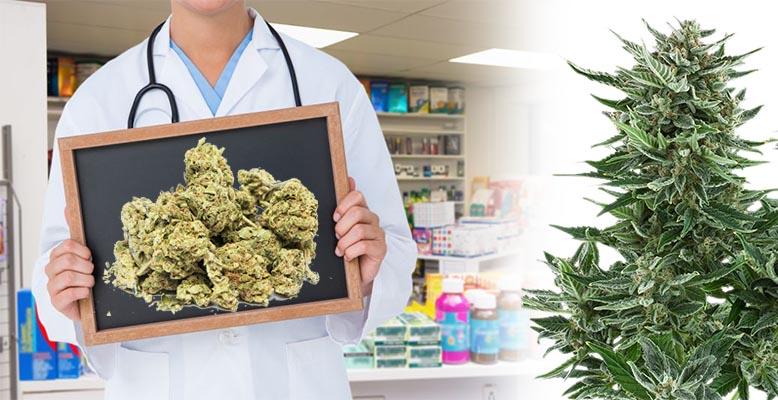 Medyczna Marihuana w trzech polskich aptekach