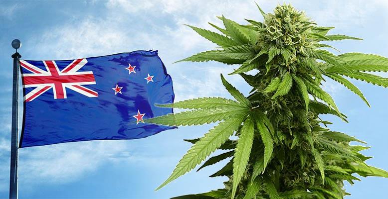 Mieszkańcy Nowej Zelandii będą głosować w referendum za legalizacją marihuany