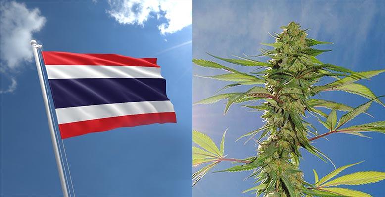 Legalizacja medycznej marihuany w Tajlandii