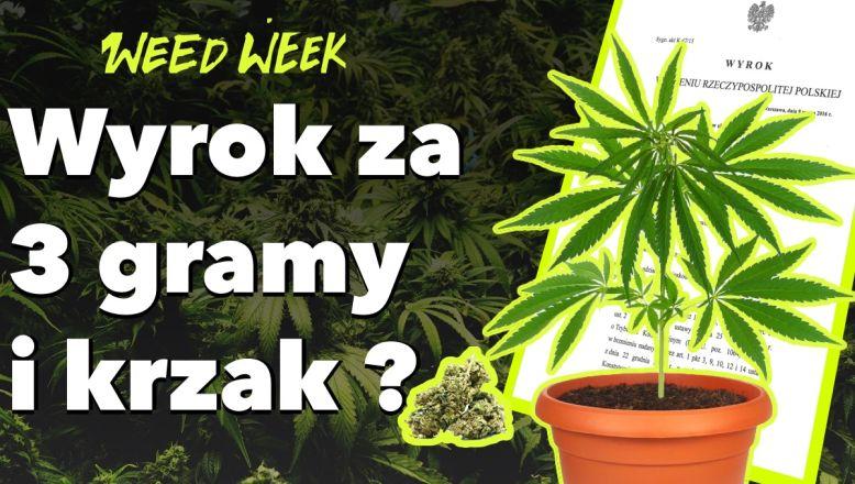 22 odcinek WeedWeek