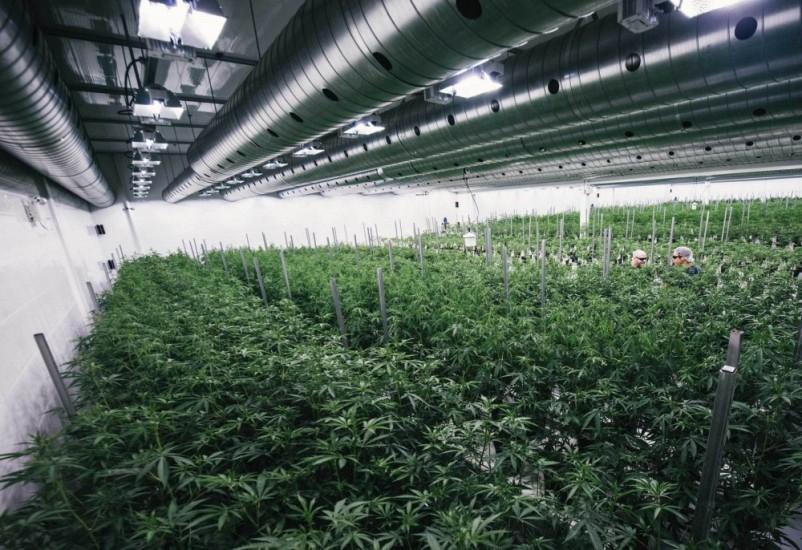 Europejskie Centrum Produkcji Canopy Growth