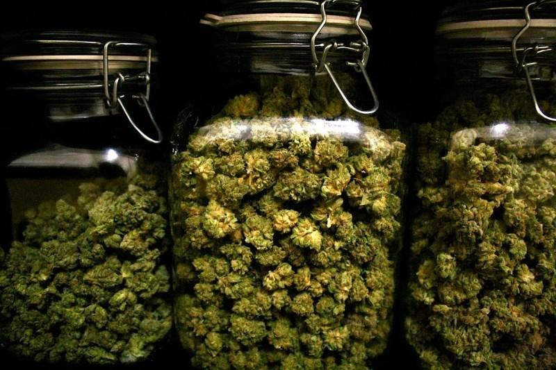 Kalifornia zarobiła 350 milionów dolarów z podatków od sprzedaży marihuany