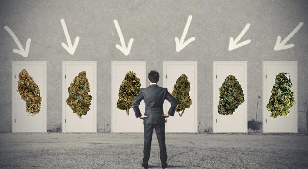 Którą odmianę marihuany wybrać na konkretną chorobę