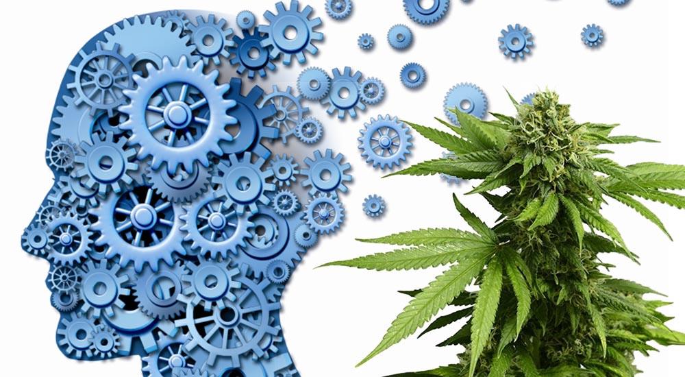 Marihuana na demencję i problemy z pamięcią