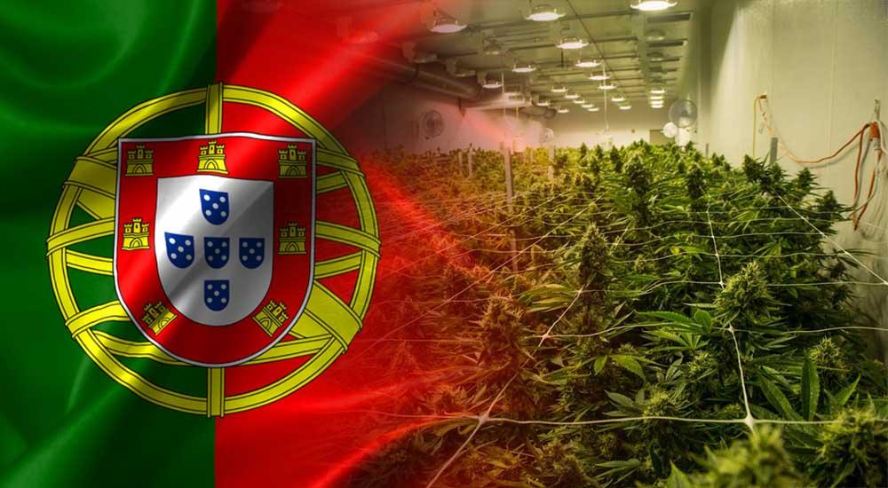 Portugalia będzie uprawiać marihuanę do celów medycznych