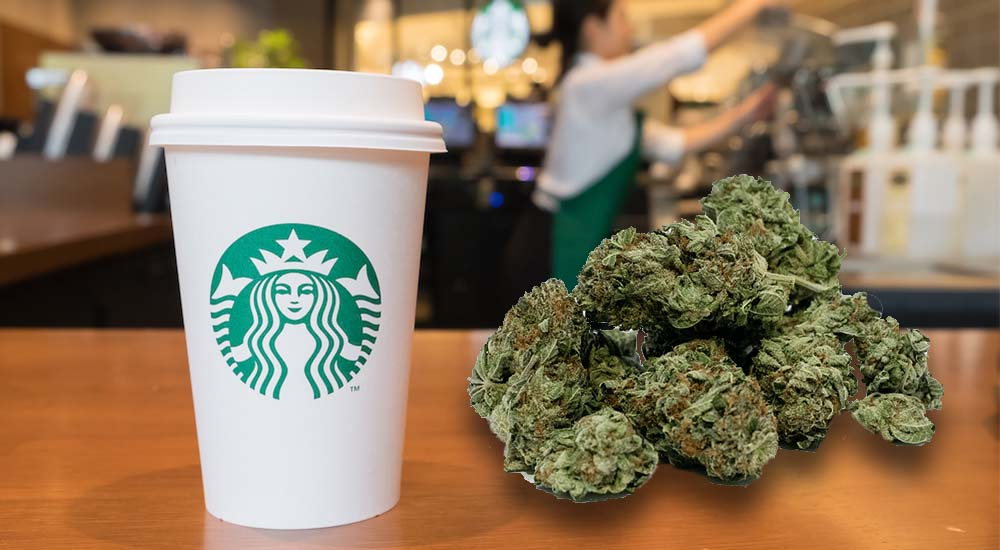 Starbucks będzie pierwszą dużą siecią oferującą najpoje z CBD