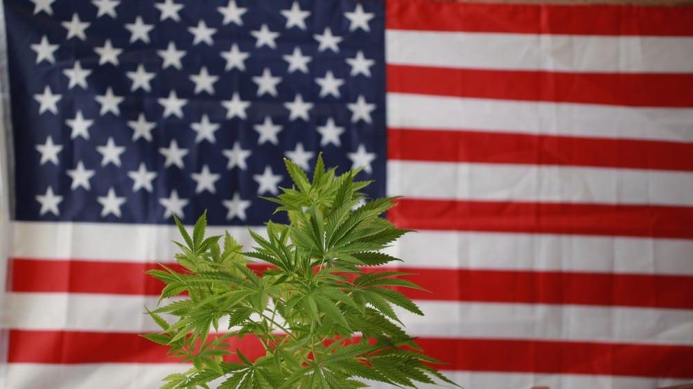 Ustawa 420 może zalegalizować marihuanę w całych Stanach Zjednoczonych