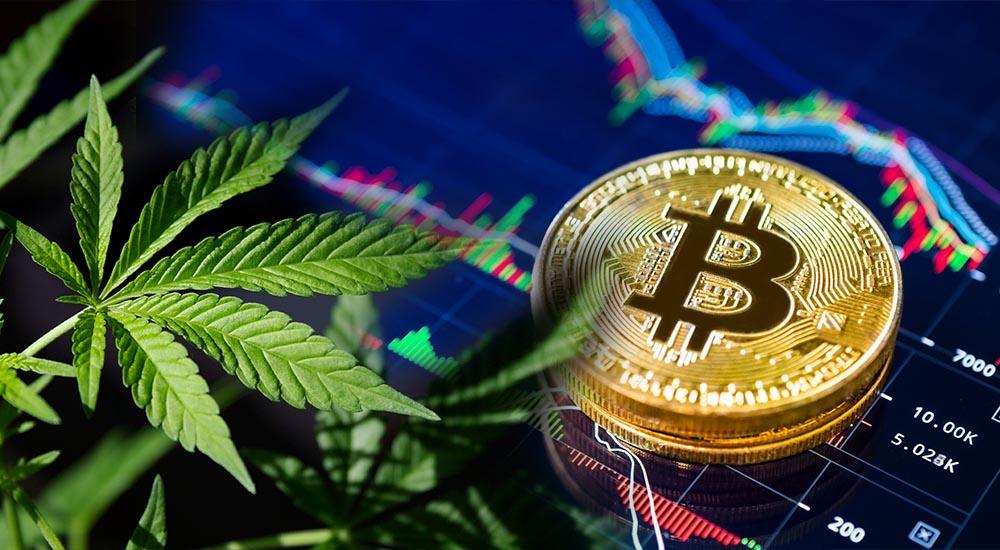 Kryptowaluty w przemyśle legalnej marihuany