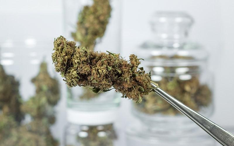 5 najpopularniejszych mitów o medycznej marihuanie