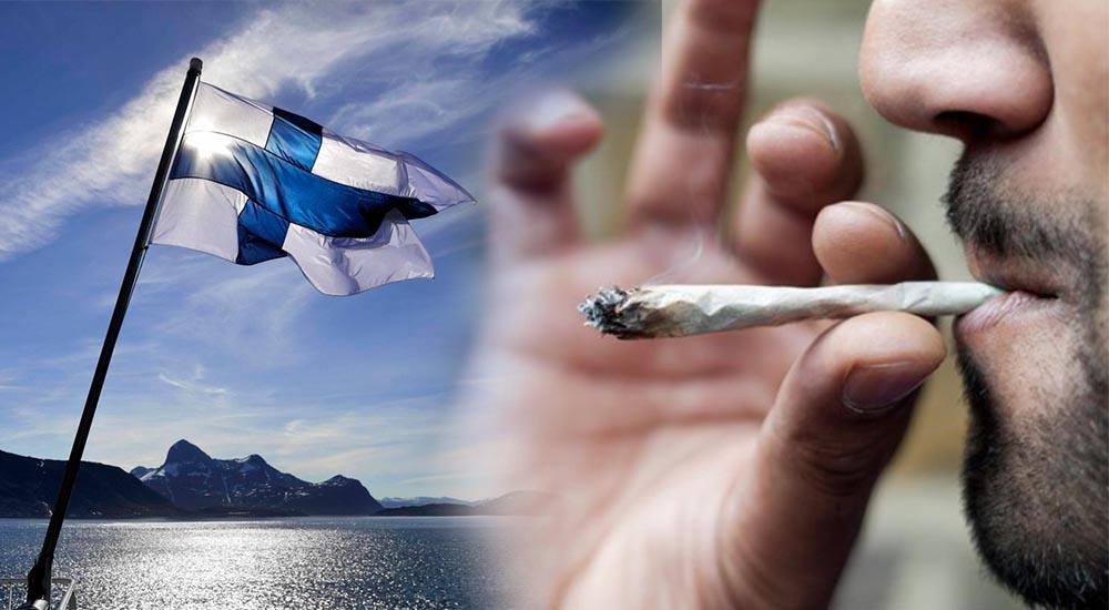 Marihuana w Finlandii jest coraz bardziej popularna